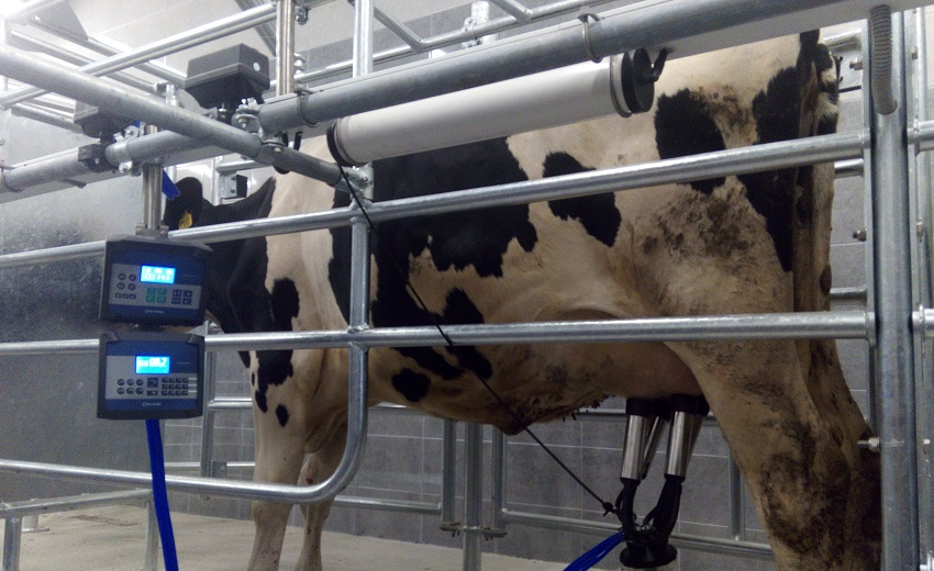 Milking parlour AUTOTANDEM 2x3